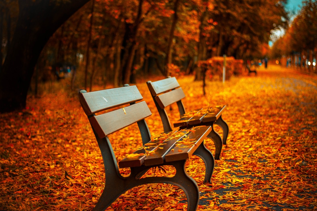 picture of a fall bench